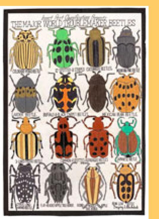 Gregory Blackstock The Major World Troublemaker Beetles, 2008 Mine de plomb, mar